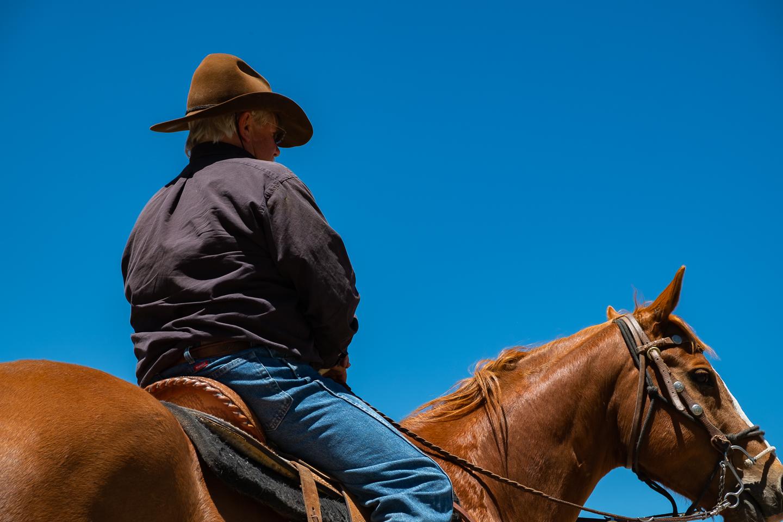 cowboy horse equestrian western rancher cattle
