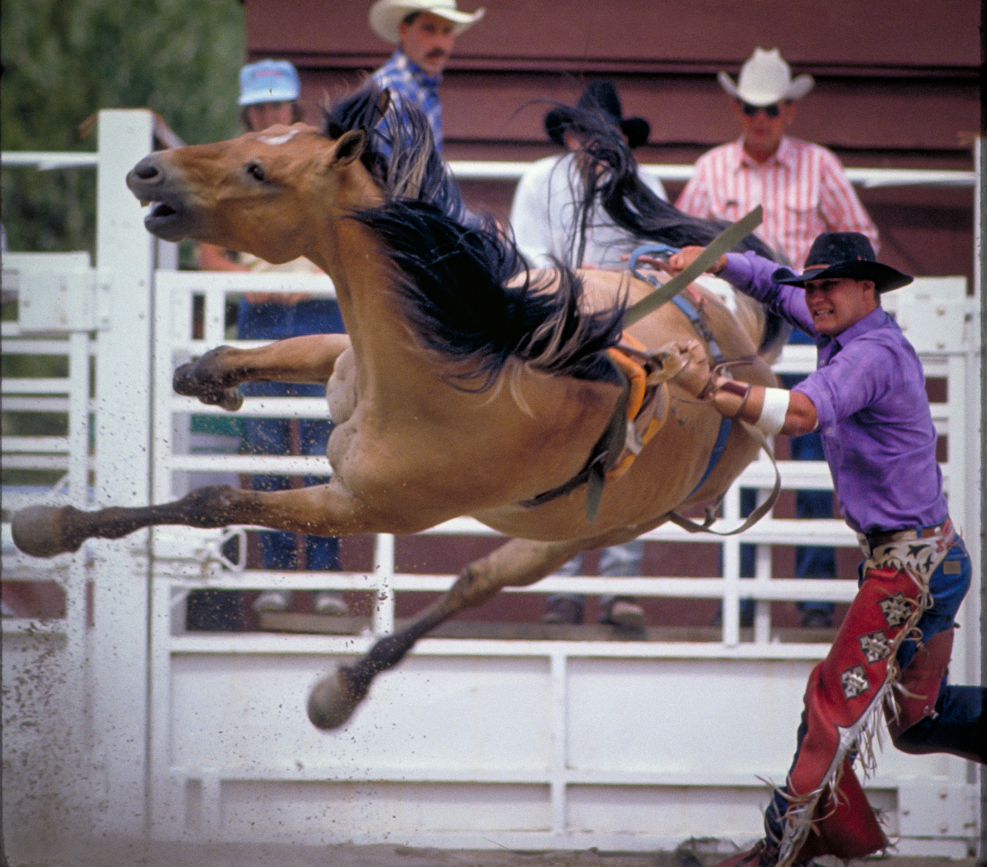 rodeo bronc western life