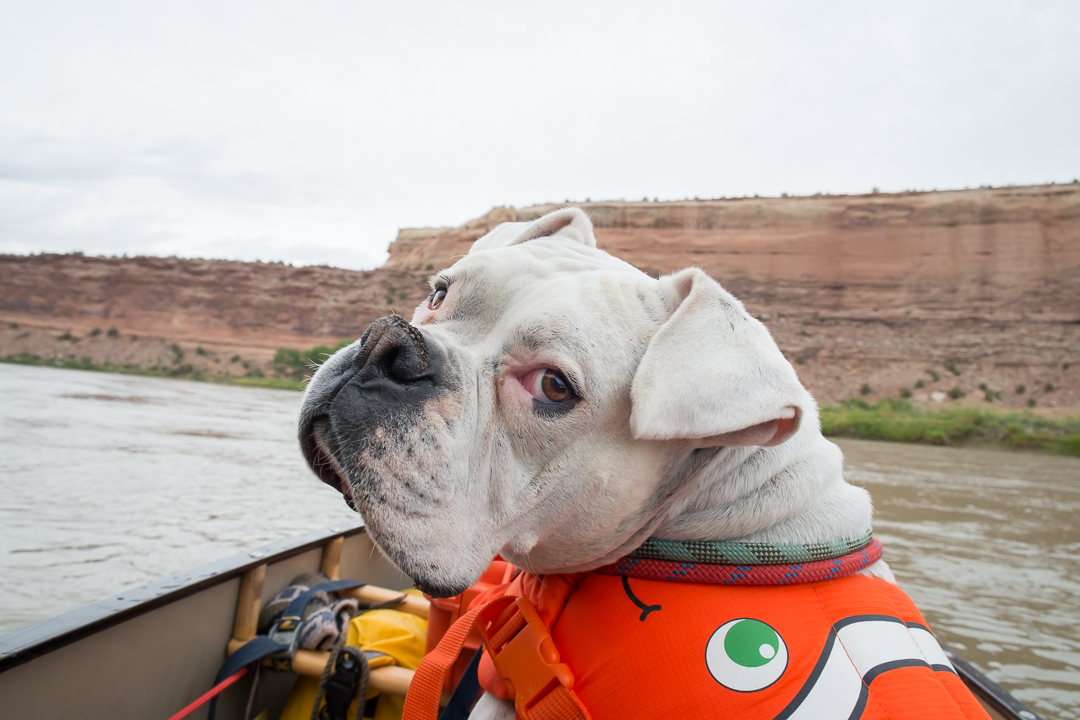 harley dog in my canoe